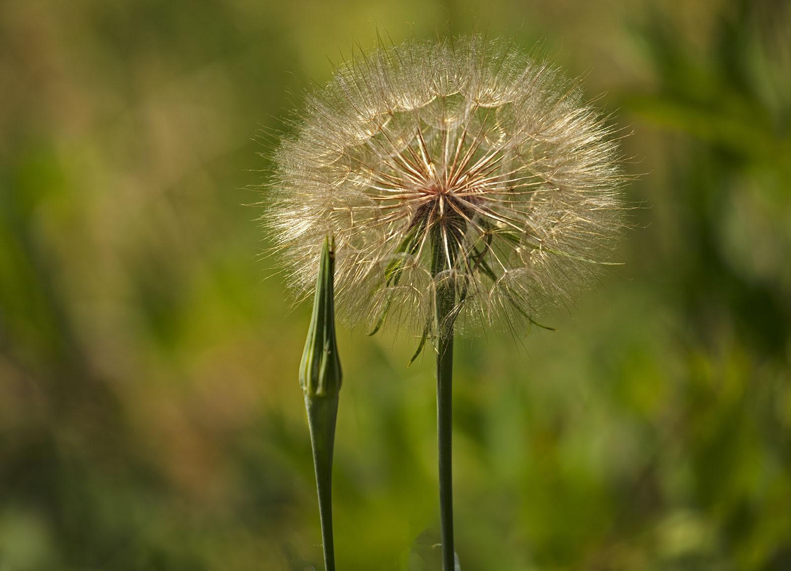 Wild Flowers & Woodland Around Denver Colorado