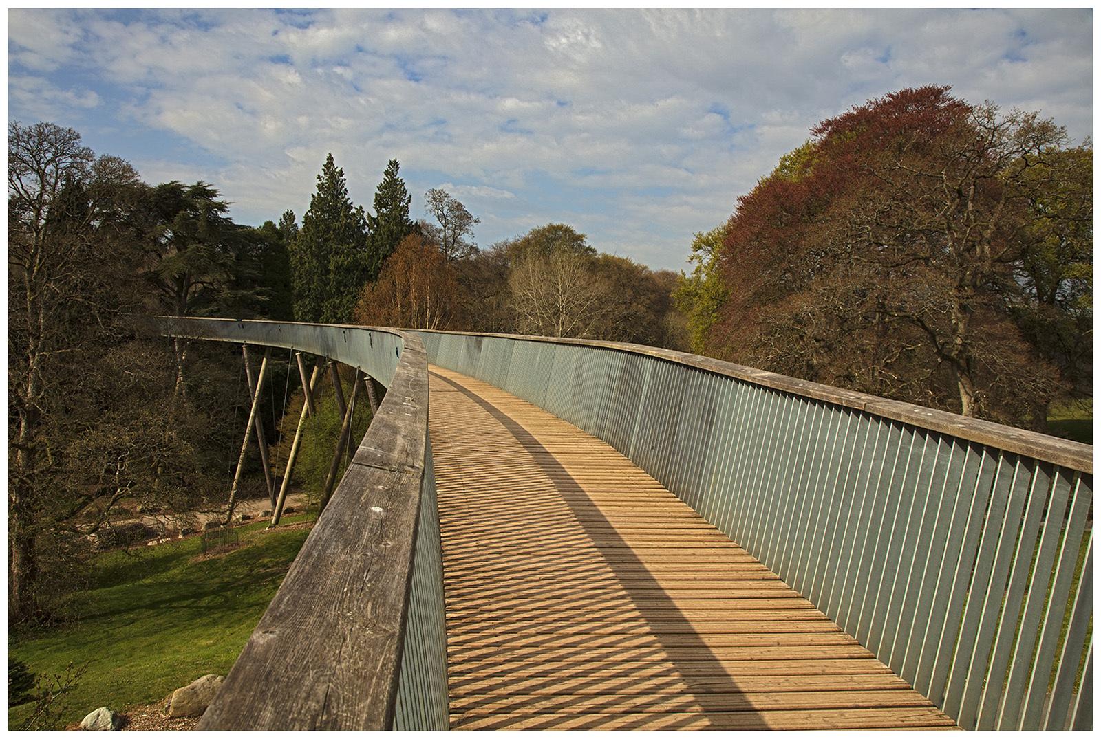 Westonbirt Tree Walk Entrance/ Saturdays Shadows  - Westonbirt Arboretum Glos