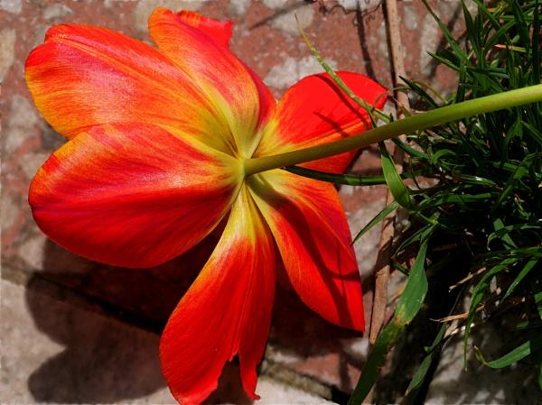 fallen beauty by elousteve
