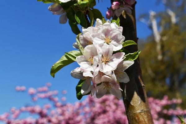 Blossom heaven by Kaxxie