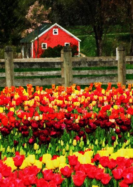 Flower Garden by jrsundown