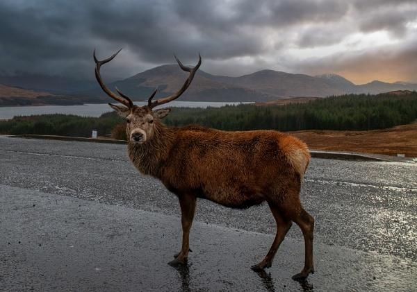 Monarch of the Glen by JohnDyer