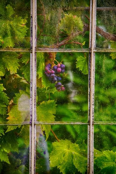 Wine Glass by squirrels