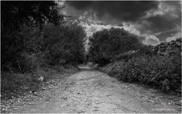Pathway by Herbert_Catania
