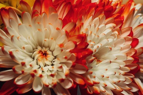 Flower Arrangements by Merlin_k