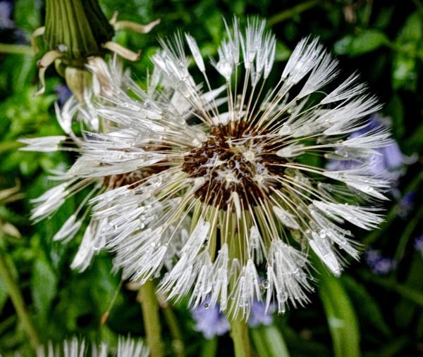 Seedy by nclark