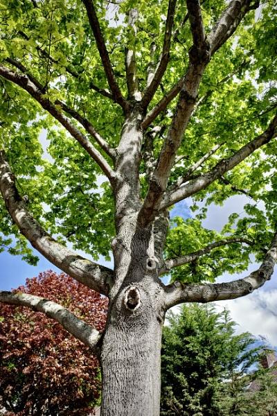 Branching by nclark