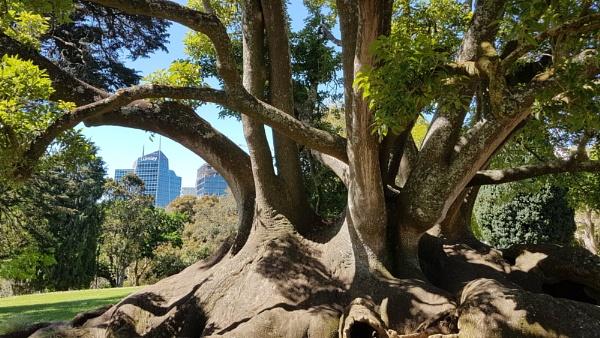Albert Park, Auckland by davek