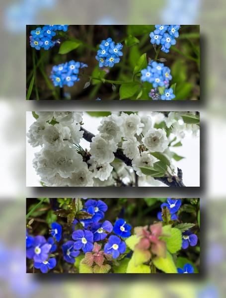 Wildflower Triptych by bobby55