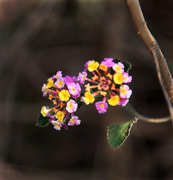 Unusual Flowers by debu