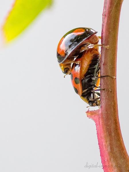Ladybirds by Alan_Baseley