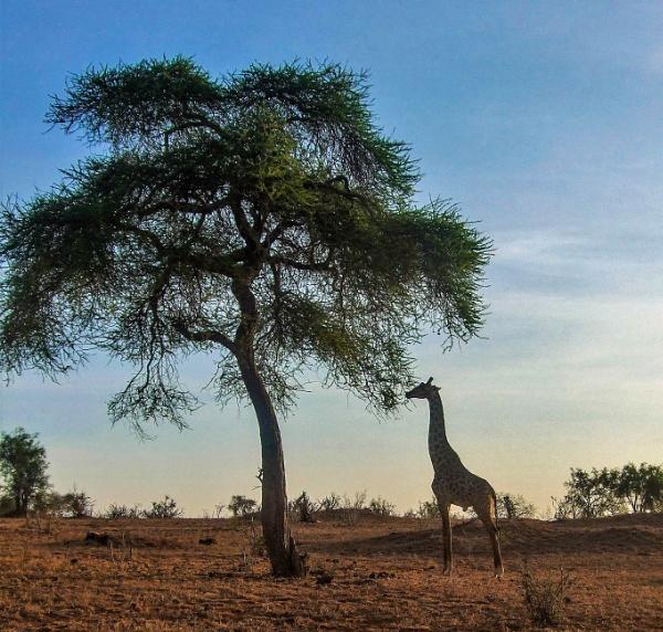 The Kenya Experience! by AH5310