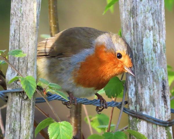 Bird on a Wire by JanOByrne