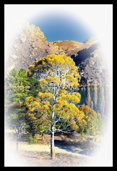 Tree of Light by capturingthelight