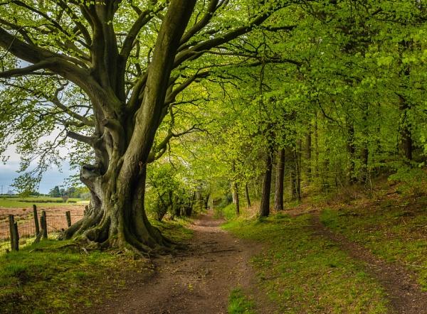 Brampton Woods by mbradley