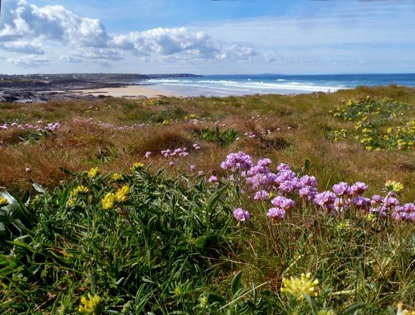 Cornish coastal flowers by JuBarney