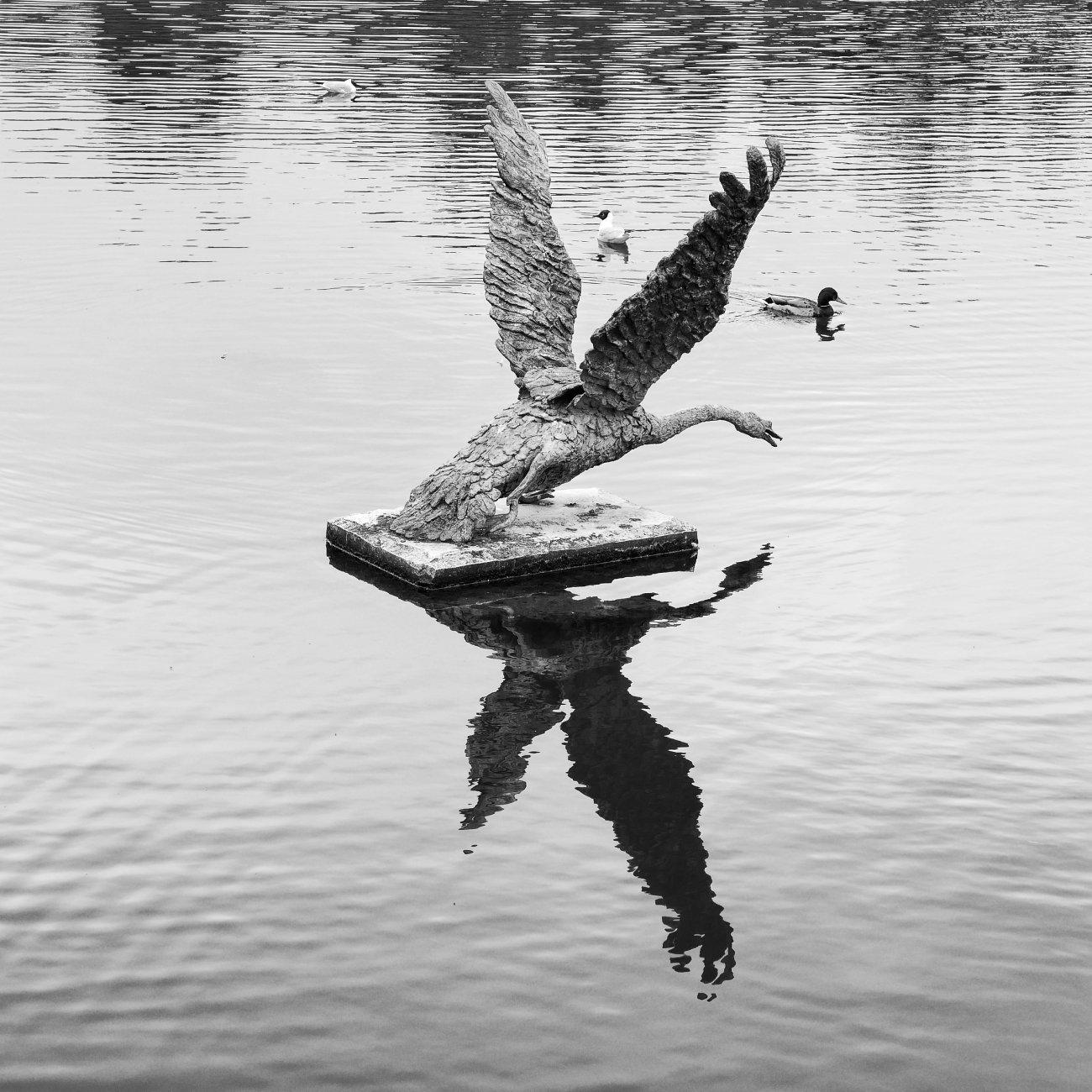 Saturday Swan Sculpture Shadow...