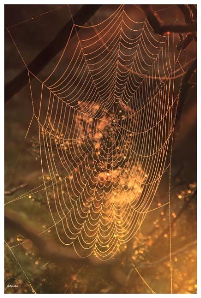 cobweb dew by mohikan22