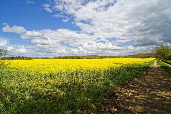 Bright rapeseed field under a large Norfolk sky. by pdunstan_Greymoon