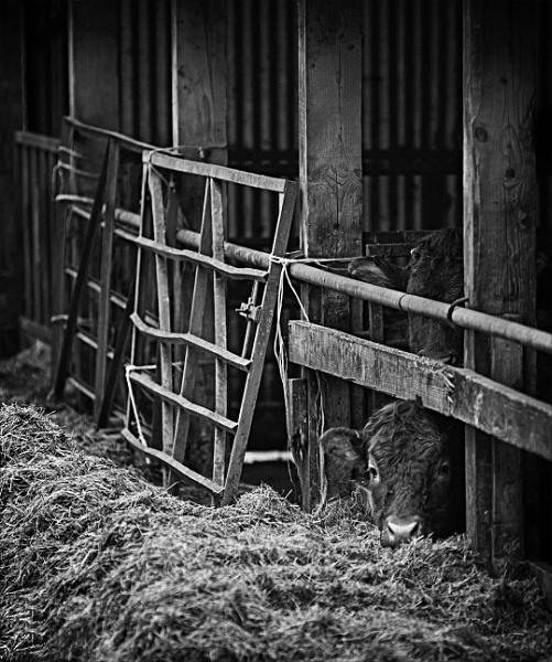 Locked Down by tralfamadorean