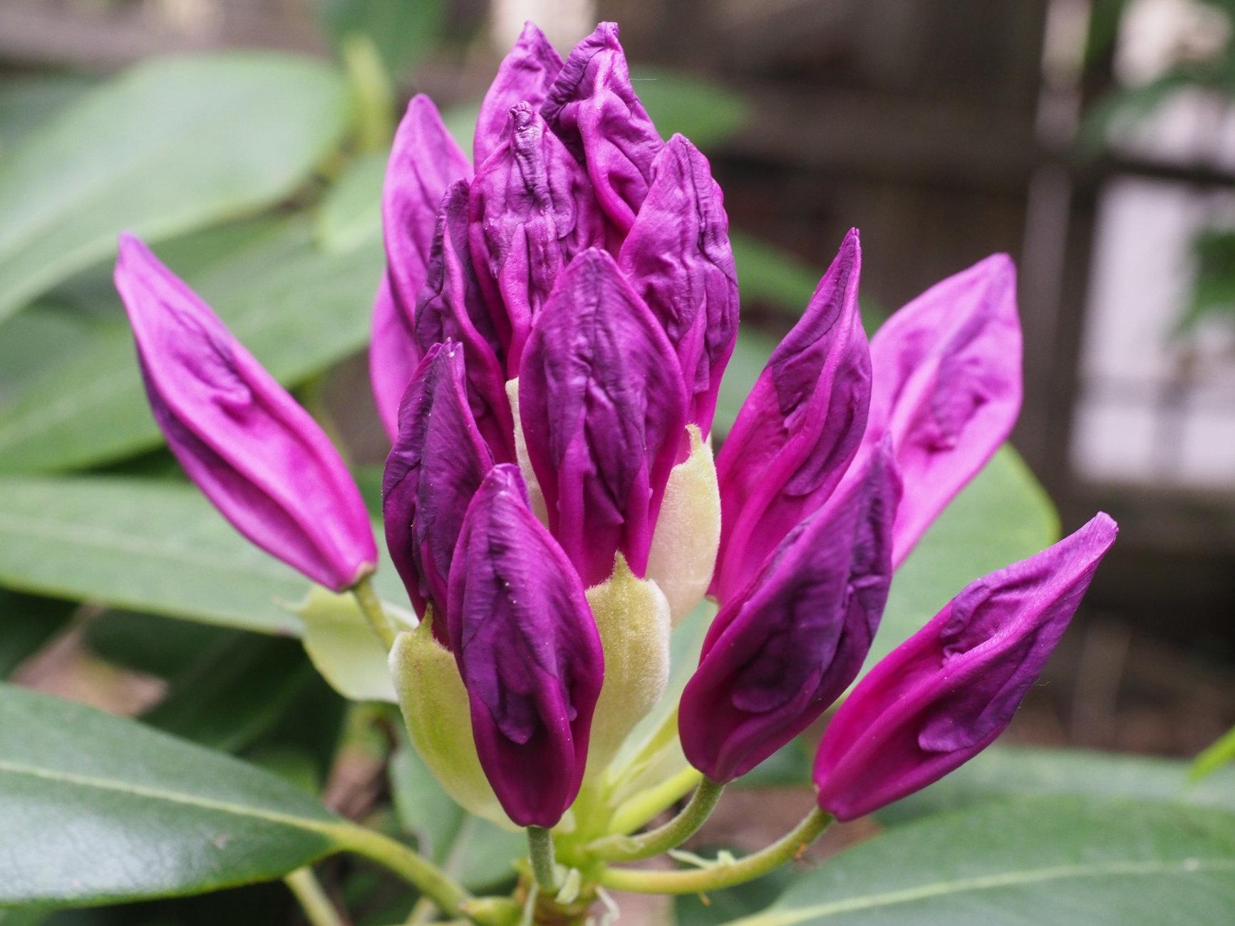 Flowers of Spring #7