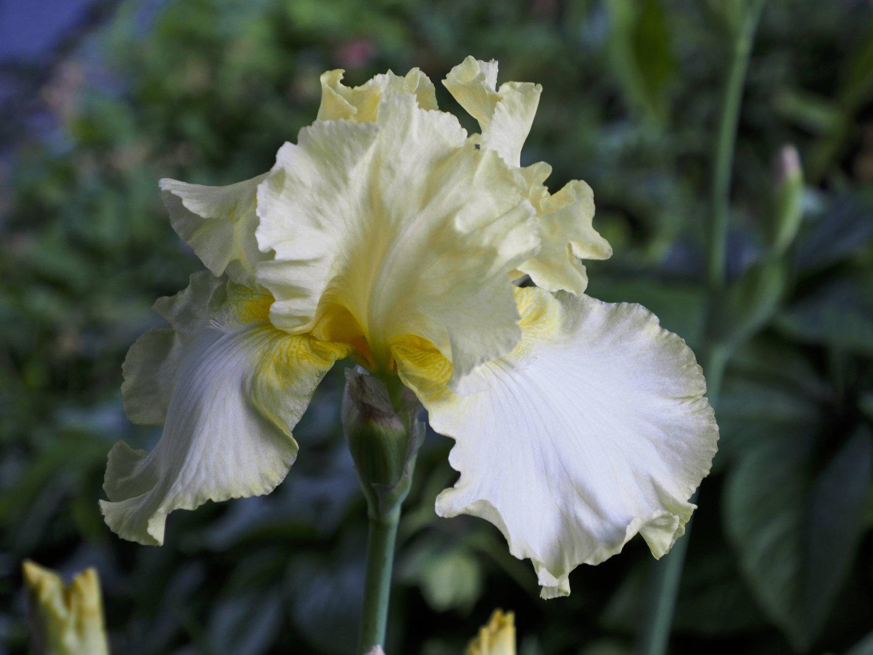 Flowers of Spring #9