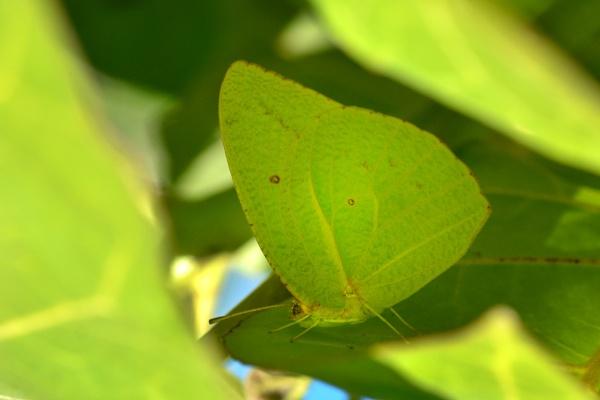 I that a leaf ?? by Coen