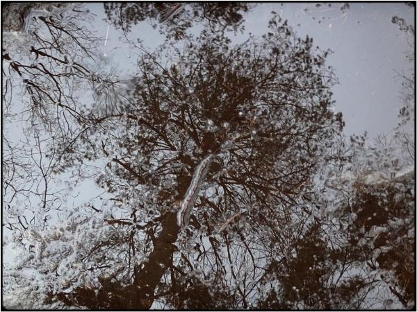 puddle-tree by FabioKeiner