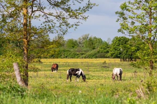 Pasture by drDinko