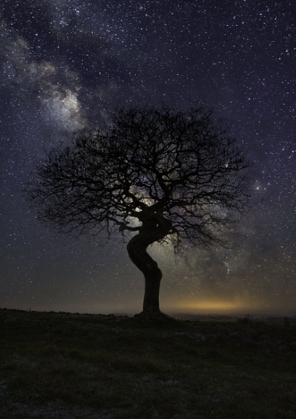 The Twisted Tree by phiggy