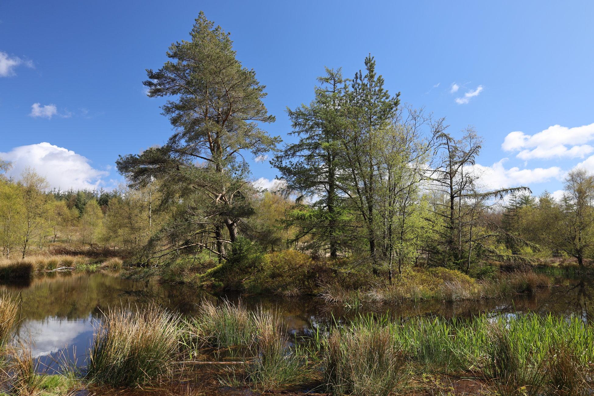 Tarn & trees