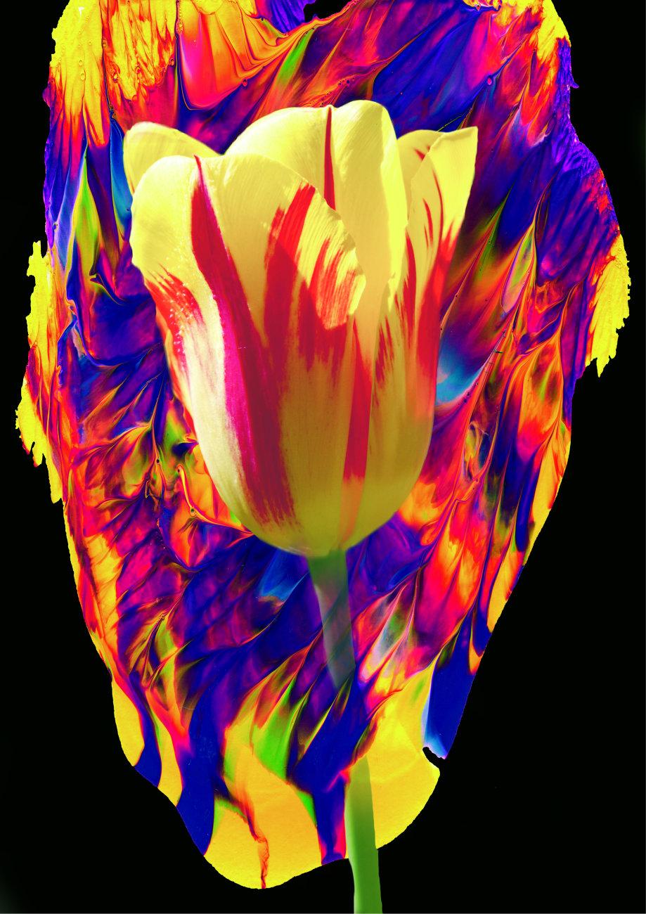 A4 Fire Tulip