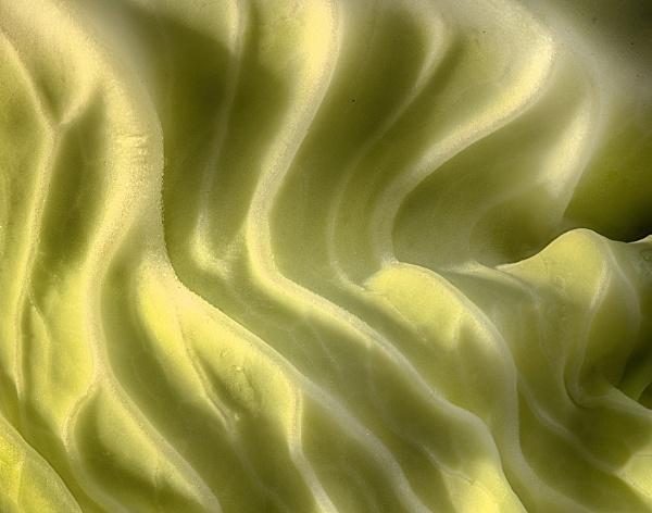 Cauliflower Leaf by iangilmour