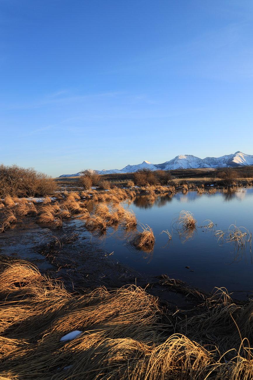 Grassy pond