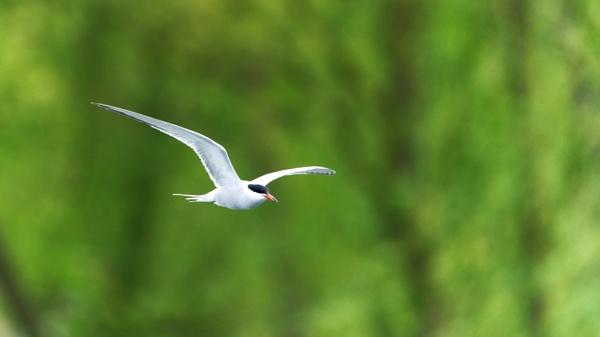 E Tern Al by Halgiver