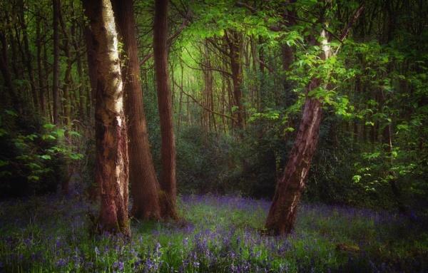 Shady Woodland by Legend147