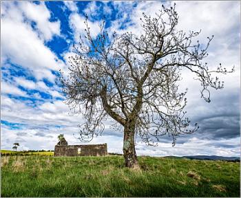 Tree and Barn