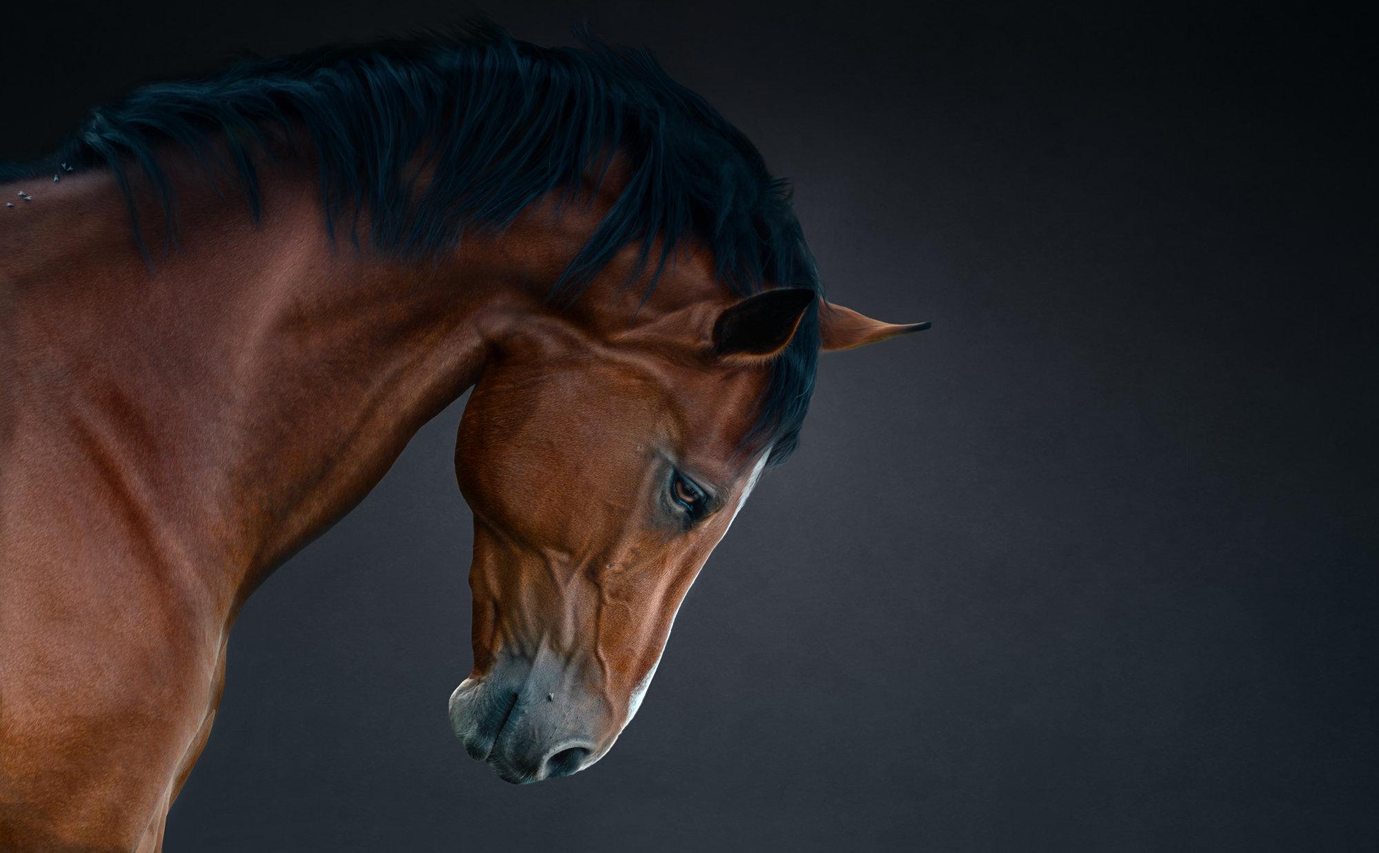 Horse 125