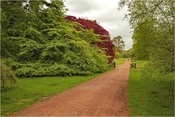 An Artist Palette - Westonbirt Arboretumn Glos