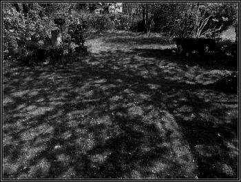 Shadows for Saturday