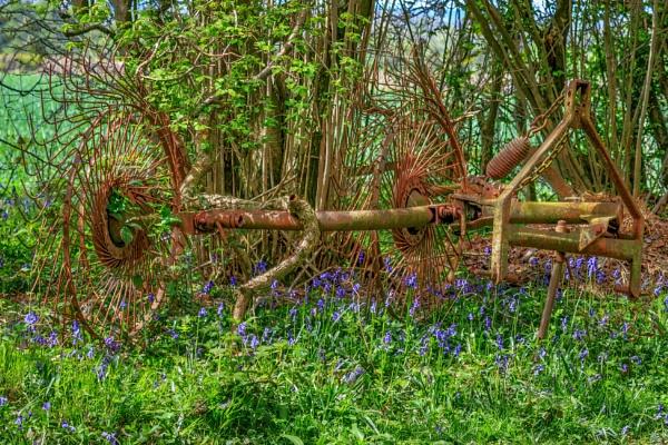 Spring surprise by Muggeridge