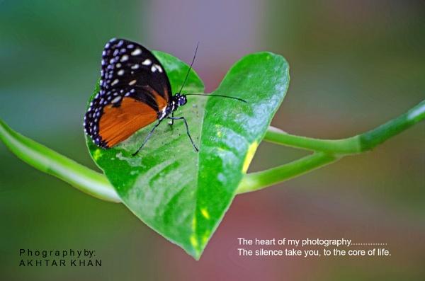 The Butterfly heart by akhtarkhan