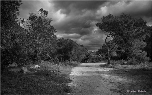 The Lone Tree by Herbert_Catania