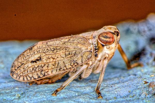 Cicadas by gerryg