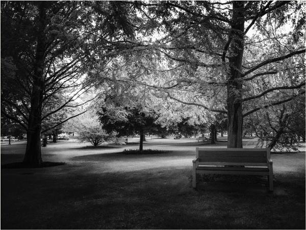 Solitude by Daisymaye
