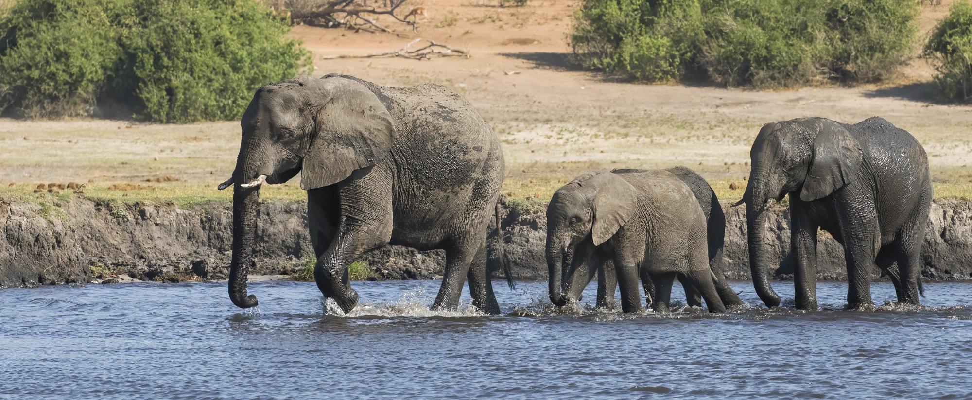 Chobe river crossing