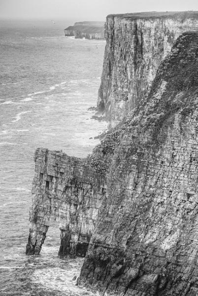 Bempton Cliffs by Alan_Baseley