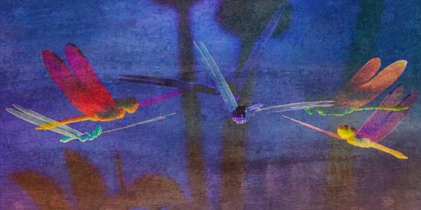 Dragonfly Disco by RLF