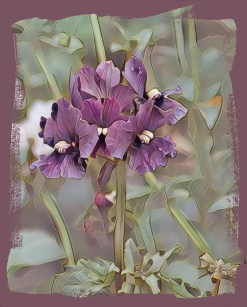 Purple Touch by sweetpea62