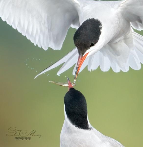 Drip Feeding by TimMunsey
